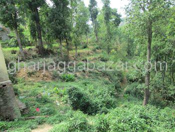 goat farming in nepal pdf